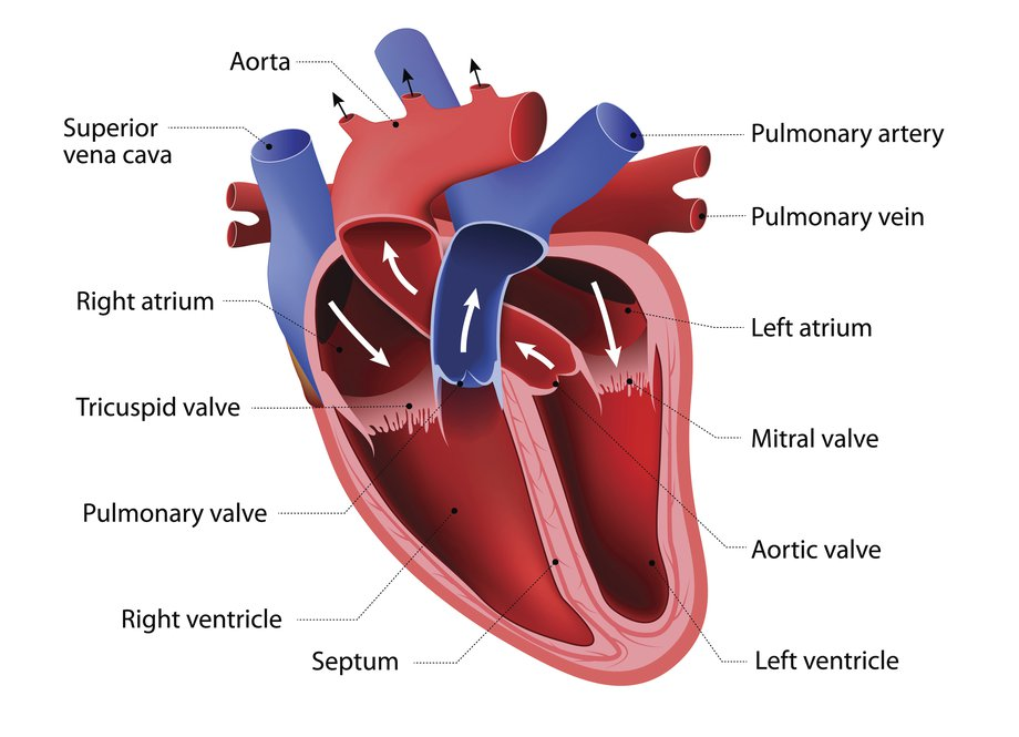 diagram of the heart congenital disease types veins arteries