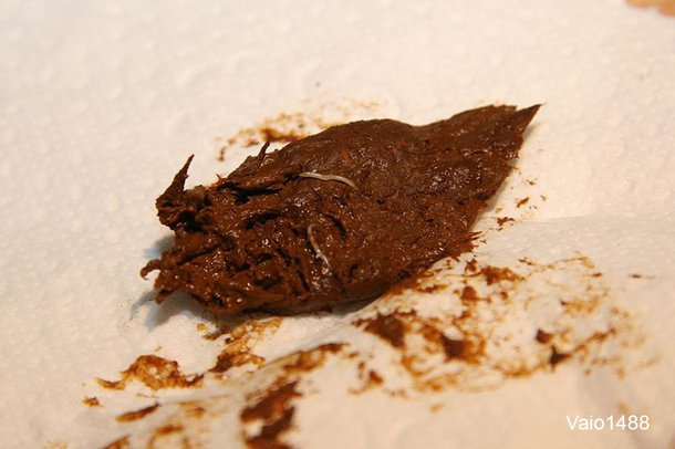 Brown lump of poo with small, thin, white worms in it, on a white tissue paper